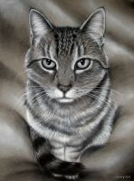 Kitty Comission - Charcoal Drawing by secrets-of-the-pen