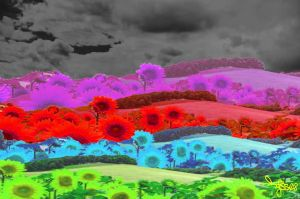 Field of Color by TJSS08