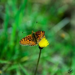 little butterfly by Man90Ray