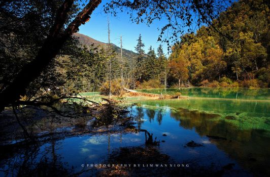 Somewhere Under The Trees by couleur