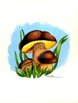 Bolet mushrooms by jilub