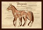 Sleipner Musculature by Xenothere