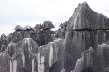 Stone Forest by everbloom