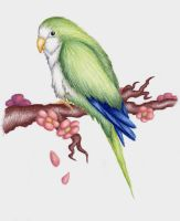 My Bird Petie RIP by Coco-Puppy-Fluffy
