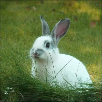 Rabbit by Buble