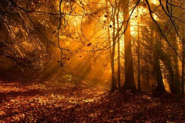 forest of gold by october-fairy