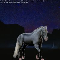 Contest Horse 5.2 by TronyRoan