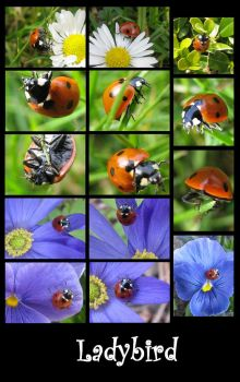 Ladybird Impressions by Calzones-Impressions