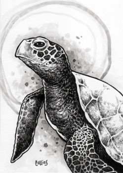 Sea Turtle by bryancollins