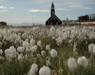 Greenlandic field full of flowers by bellaricca