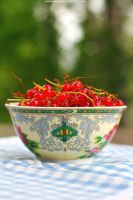 Redcurrant by LilyBrilliant