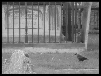 Graveyards and Crows by thesatancorporation