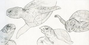 Happy World Turtle Day! by meatfortress