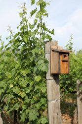 Birdhouse in the Vineyard by ChinookDesigns