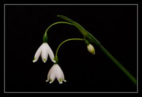 Snow Bells by ernieleo