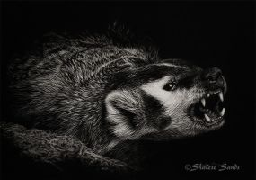 Attitude - Scratchboard by ShaleseSands