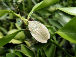 Stink Bug by BreeSpawn