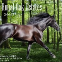 Royal Oak Estates by midholly
