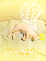 R.I.P Raphael.. You Will Be Missed... (6/28/18) by xBrokenIllusionx