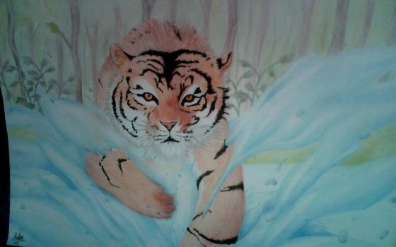 Tiger by M2Art