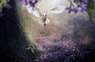 Owl in the spring by Neitin