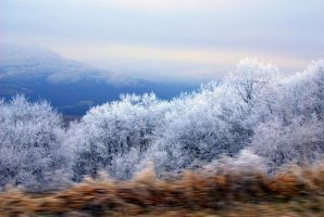 3-D moving effect: Winter road by sunlookout