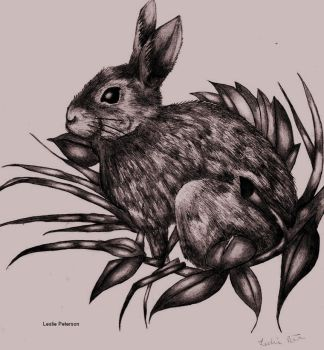 Watership Down by Zanfandel