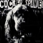 Cocker Spaniel Cover by RossiTorres