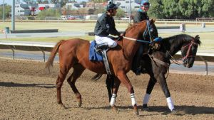 Racehorse Stock 56 by Rejects-Stock