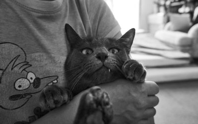 itchy and scratchy by morinetti