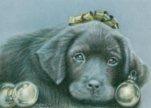 Christmas Puppy by Carol-Moore