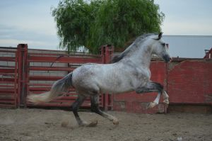 DWP FREE HORSE STOCK 179 by DancesWithPonies