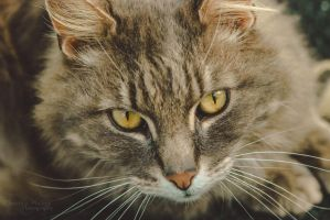 Cat-2584 by Christina-Phillips