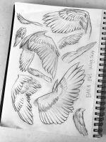Barn Owl Wing Study by Abyssal-Depths