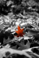 Last Leaf by CrawlingGirl