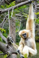 Monkey Thing 2 by WendiJo129