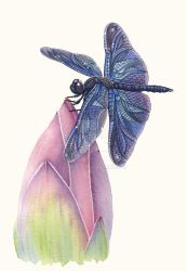 Dragonfly and Lotus by ZHField