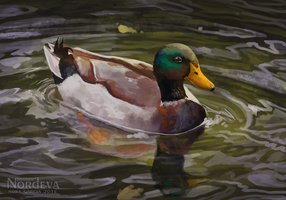 Duck (+Speedpaint) by Nordeva