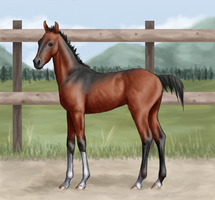 SCeA Turnpike Toss Up - Foal Ref by Storm-Coast