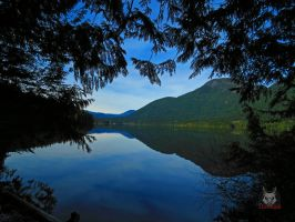 Lake Reflection Through Gap In Trees by wolfwings1