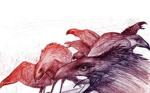 crows by JuLaIa
