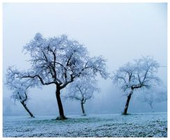 Iced by JeanFrancois