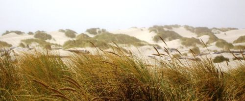 Sand Dunes 4 by LionHearted1956