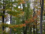The Fall Trees