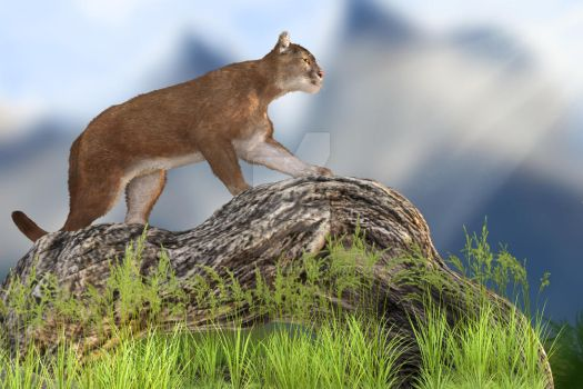 Mountain Lion/Cougar by Elle-Arden