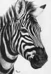 Stripes by Lylenn