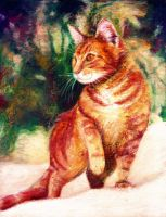 Red Cat by Meorow