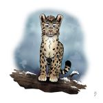 Fictional 01 - Subadult Male Snow Leopard by FerrerasBS