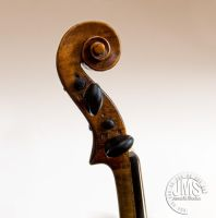 Violin Neck and Scroll by steeber