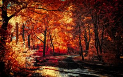 The colors of Autumn - Part VIII by myINQI